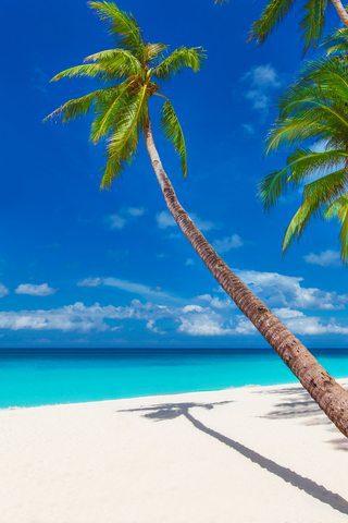 tropical_beach